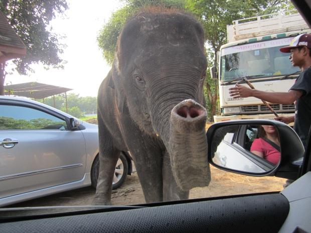 Elephant in Ayutthaya