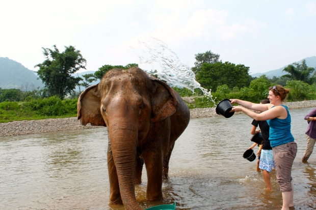 Elephant Nature Park in Mae Taeng Valley