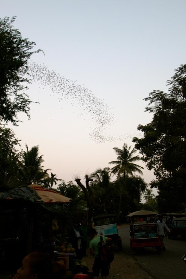 Bats flying out of the cave at dusk in Battambang