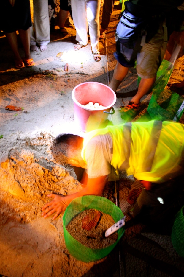 Planting the turtle eggs in the hatchery at Selingan Island - as they were planted in the shade, they will be boys