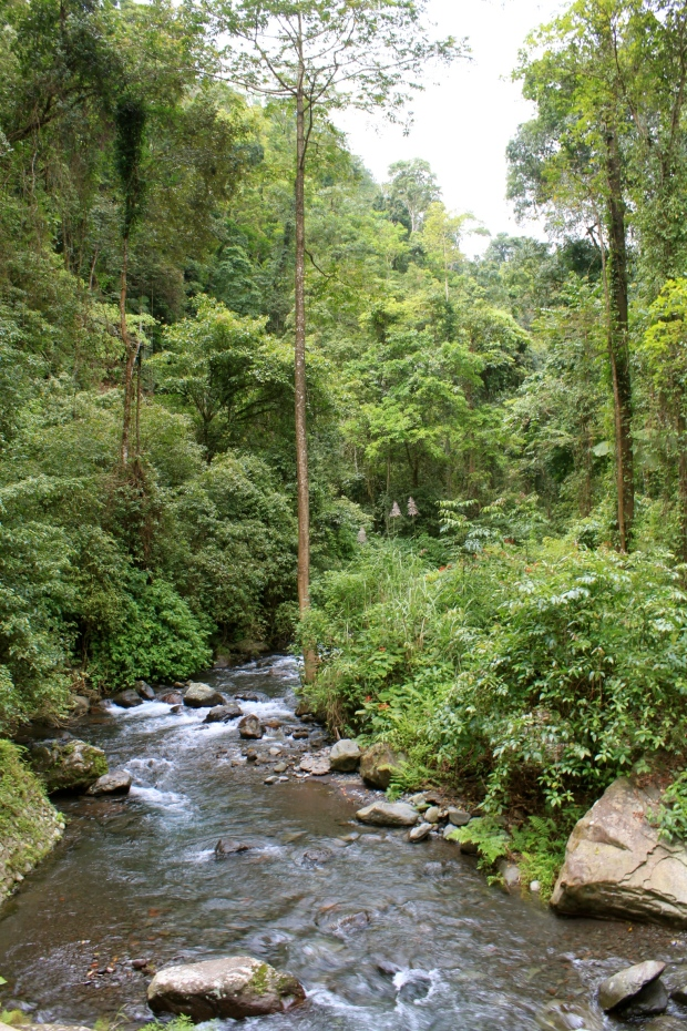 Walking through the forest to the Tiu Kelep waterfall