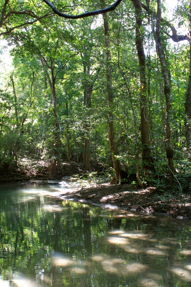 Moyo Island forest