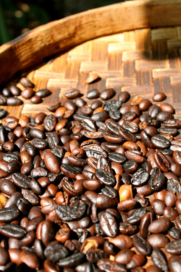 Roasted luwak coffee beans
