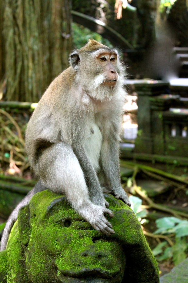 At the Monkey Forest Sanctuary in Ubud, Bali