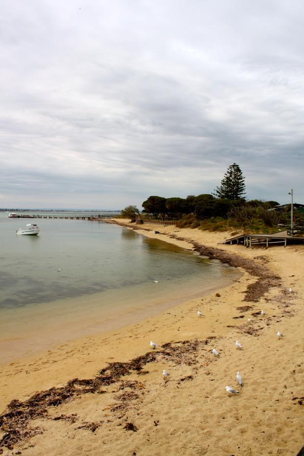 Penguin Island, near Rockingham, South Perth