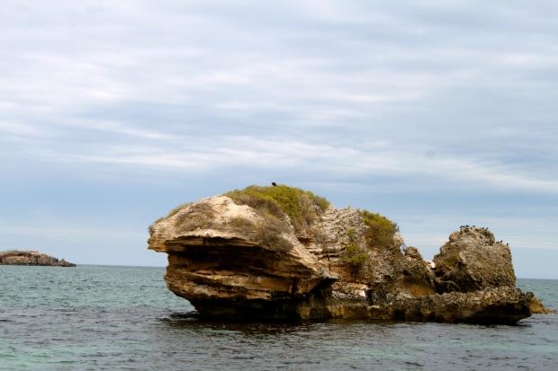 Osprey on a rock near Penguin Island, Rockingham, South Perth