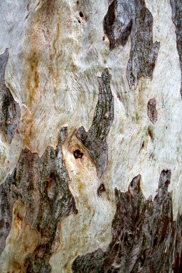 Tree bark in the Kings Canyon Creek