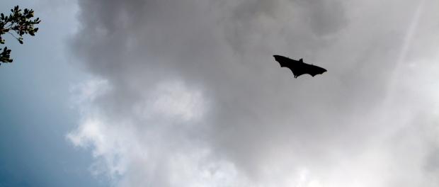 Bats along Katherine Gorge