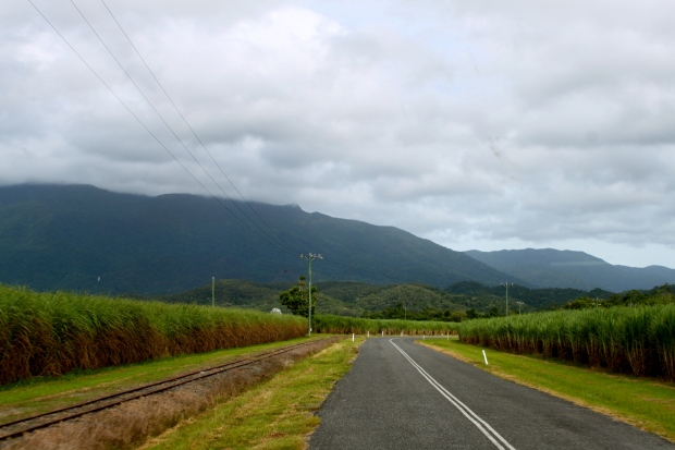 Driving past sugar cane plantations on the way to Cape Tribulation