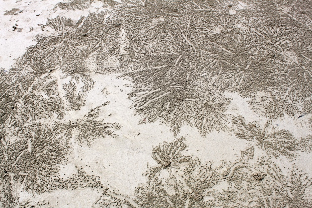 Sand patterns made by crabs