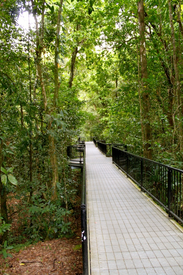 The walkway at Mossman Gorge