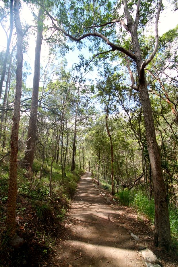 The Summit Track down from the Mount Coot-tha lookout in Brisbane