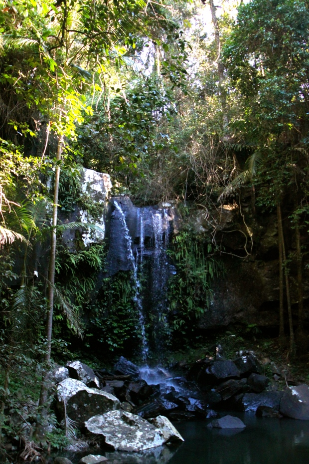 Curtis Falls at Tambourine National Park