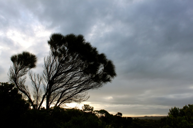 Driving home from the Great Ocean Road