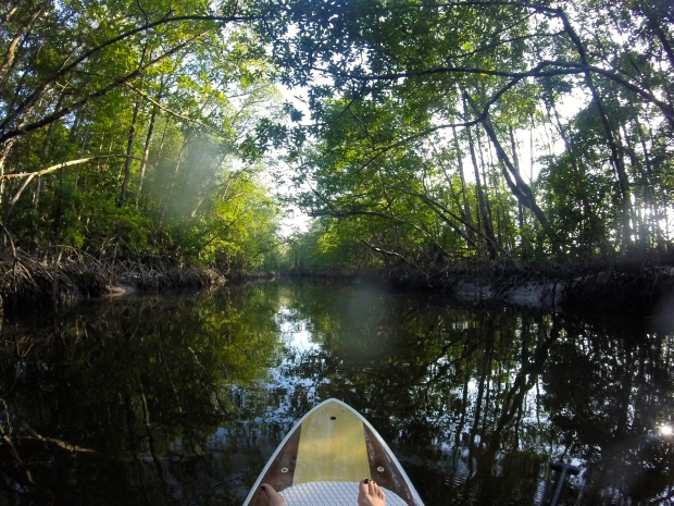 Paddle boarding through the mangroves